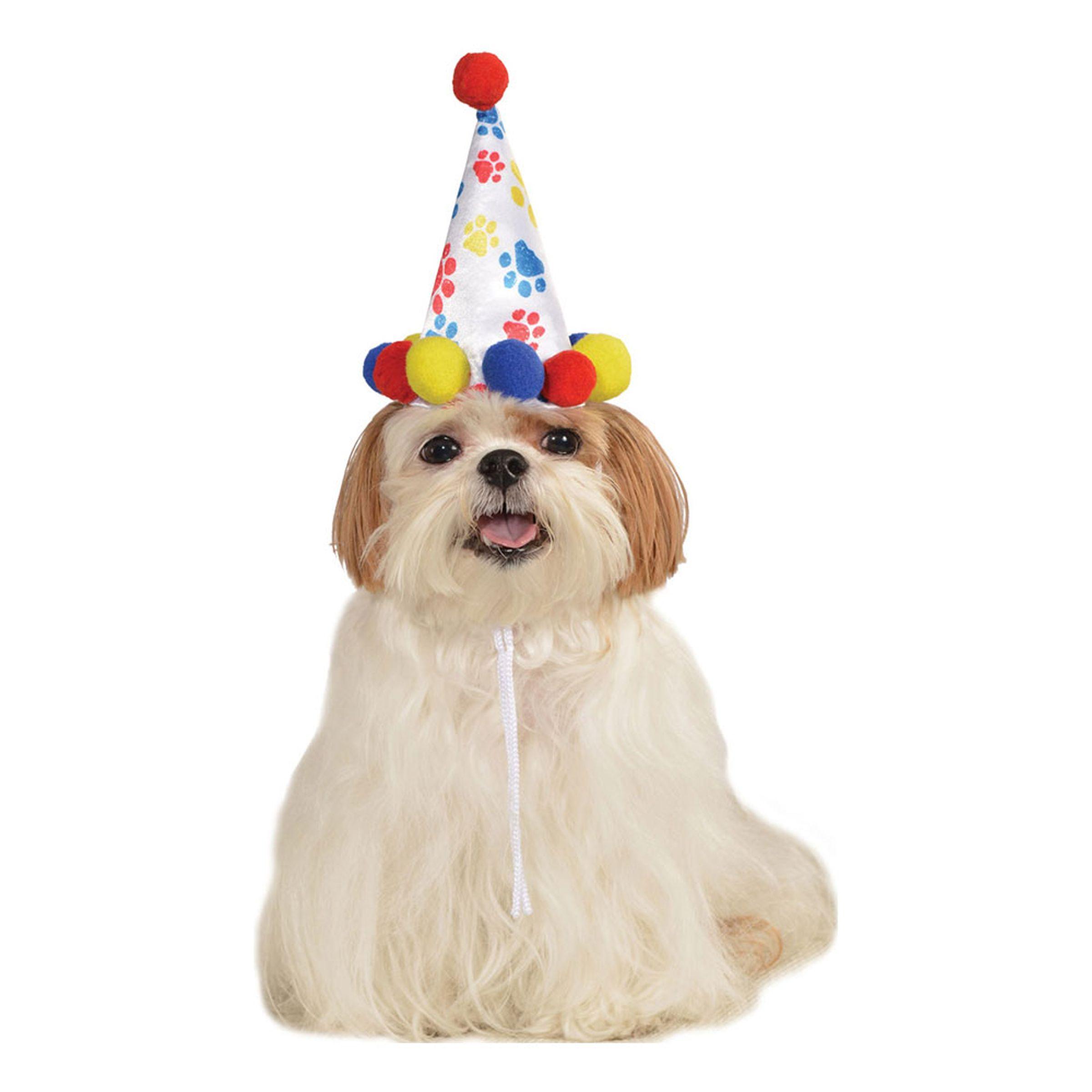 Födelsedagshatt för Hundar - Small/Medium